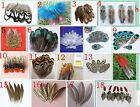 Wholesale 10-100 PCS natural beautiful pheasant & peacock feathers DIY 2-8inches