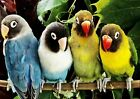 TROPICAL LOVEBIRD PARROTS ANIMAL POSTER PICTURE PRINT Sizes A5 to A0 **NEW**