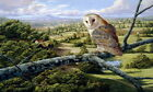 Home Art Decor Vintage Barn Owl Bird Oil painting Picture HD Printed on canvas