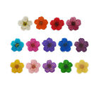 DF029 20 Pcs, 200 Pcs 0.8cm x 0.8cm Nail Art Dried Flower Set-Small Narcissus