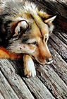 Modern Home Decor HD Prints oil painting on canvas wall art Fantasy wolf NTD82