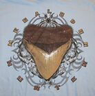 Fossil hunting megalodon shark tooth t shirt
