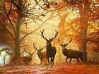 Deers in Woodland Forest Area Stags Wild Animals Canvas Pictures Wall Art Prints