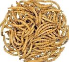 DRIED MEALWORMS - (50g - 12.5kg) - Wild Bird Animal Pet Feed doby Treats vf Food