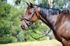RUMANI Horse Leather BRIDLE & ANTISLIP REINS With Raised Noseband & Browband