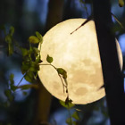 18/20CM 3D USB LED Magical Moon Night Light Moonlight Table Desk Moon Lamp Gifts