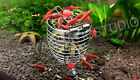 Stainless Shrimp Feeding Cage Dish Crystal Red Cherry Shrimp Fish Snail Tank NEW