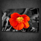 BEAUTIFUL RED YELLOW FLOWER BOX MOUNTED CANVAS PRINT WALL ART PICTURE PHOTO
