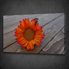 RED ORANGE SUNFLOWER ON WOOD BOX MOUNTED CANVAS PRINT WALL ART PICTURE PHOTO