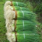 100pcs spring onion Giant Chinese Green Onion Seeds Chinese Vegetable Seed Home
