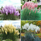 20Pcs/bag Rare Cattail Reed Pampas Grass Ornamental Plant Home Plants Garden