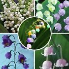 40 seeds Lily of the Valley bell orchid seeds bonsai flower seed