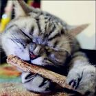 5PCS Cat cleaning teeth Pure natural catnip pet cat molar Toothpaste stick silve