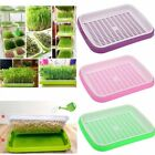 Seedling Starter Tray Seed Grow Germination Plant Nursery Propagation Plate USA
