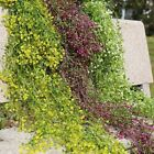 Long Artificial Hanging Vine Plant Garden Wall Decoration Flowers Leaves Garland