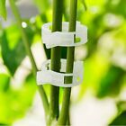 Garden Plant Support Clips for Trellis Twine Greenhouse Tomato Grafting Clips US