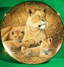 "Collector Plate ""African Lioness & Cubs"" by Michael Matterly. Franklin Mint  VGC"
