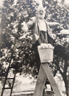 Grandpa Apple Picker:  Glorious 1910's Photograph, Delicious and Wholesome!