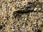 No.27 Herbal Blend Mix - Coltsfoot Red Clover Rosemary Thyme Lavender Mullein