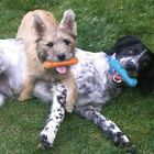 Durable Rubber Cute Puppy Teething Dental Care Interactive Dog Chew Toys