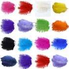 "10PCS Ostrich Feathers approx 10""-12"" 25cm-30cm Wedding Party Decorations"