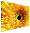 Yellow Paint Floral Flower Canvas Picture - Large+ Any Size