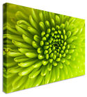 Green Bristles Floral Flower Canvas Wall Art Perfect Pictures Large