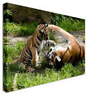 LARGE Tiger Cub Canvas Wall Art Pictures For Home Interiors