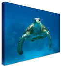 LARGE Wall Art Canvas Pictures | Underwater Turtle | For Home Interiors