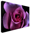 Blooming Purple Rose Petals Flowers Canvas Pictures Wall Art Prints