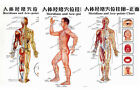 7 charts - Acupunture Chart and Reflective Chart - digital file - Special offer.