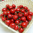 10/40 X Decorative Artificial Red Cherry Fruit Plastic Fake Kitchen Garden Decor