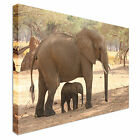 Elephant calf shaded by mum Canvas Art Cheap Wall Print Large Any Size