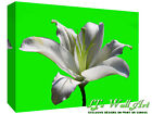 White Lily Flower - Lime back- Cotton Canvas Wall Art Picture Print - ALL SIZES