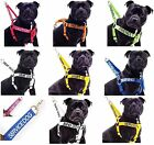 Strong As Leather Staffy Staff Staffie Dogs Harness Lead Leash Collar Or Sets