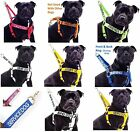 Large Extra Large Dog Harness Or Comfort Grip Padded Handle Lead Sets By Dexil