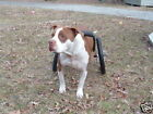 Dwanecart Dog Wheelchair - Moon Doggie for Mid-Size Dogs-Shelties,  Beagles,  etc
