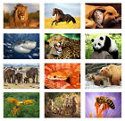 Animals Wild Zoo Pets Animal Mammals Nature Print Poster, A3 or A4 Size Posters