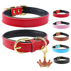 Soft Padded Leather Dog Collars for Small Medium Dogs Beagle Dachshund