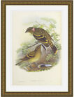 Guttated Bower-bird by John Gould Gold Leaf Frame ready to hang