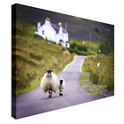 Sheep walking on the road Canvas Wall Art prints high quality
