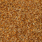 Organic Wheat: whole #5942 - 100% Organic  GMO Free - 50lb