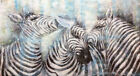 AUS Stock - Original Oil Painting - Zebra Family 1400x700 - Unframed Or Canvas
