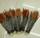 10-100pcs 8-10inch/20-25cm natural precious Lady Amherst Pheasant feathers