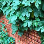EVERLASTING TRELLIS NETTING Super Strength Any Size Net for Espaliers Climbers