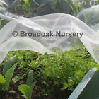 Woven Insect Netting Garden Veg Crop Protection Mesh, per metre, Various Sizes