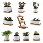 Small Ceramic Succulent Plant Pots White Collecion Serial with Bamboo Trays