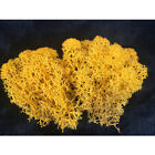 Mango Reindeer Moss Preserved Light Orange Dried Moss for DIY Jewelry Making