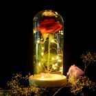 Enchanted Rose Flower Lamp Mother's Day Gift For Mother Beauty and The Best
