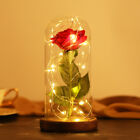 Enchanted Rose Flower Lamp - Best Valentine's Gift For Her - Beauty and The Best